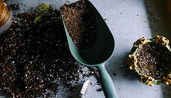 為何生活越艱難,園藝越昌盛?