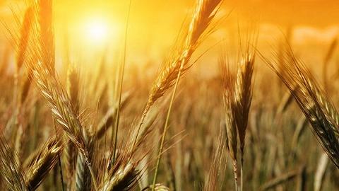 库存充足但物流受阻,全球粮食体系还面临另一大挑战