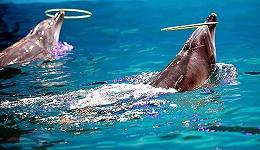 动保困局:中国海洋公园行业高速成长的背面