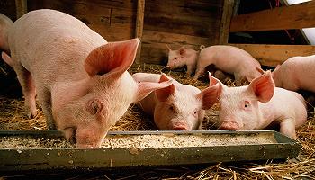 7月生猪产业发展指数继续回落,生猪产能恢复现拐点