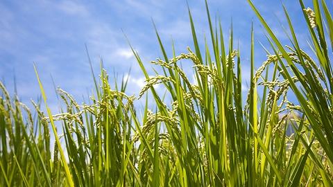 """天津援承这5年:播撒希望的种子 留下带不走的""""致富经"""""""
