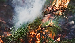 今年前4月发生森林火灾466起,应急部:不排除发生重特大火灾的可能