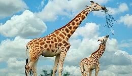豹出逃引发全民关注,动物园除了看动物还能给我们带来什么?