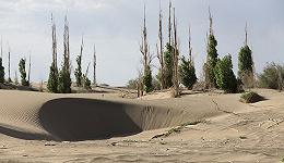 直通部委   中国尚有20多万平方公里沙化土地需治理 全总:要按规定发放高温津贴