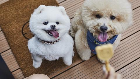 上海镛舍推出宠物住宿套餐,带上你的宝贝去度假吧