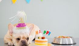 养宠氪金时代,236元的生日蛋糕只是低配?