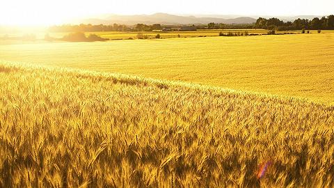 粮农组织和经合组织:飙升的全球食品价格在未来几年料将回落