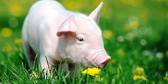 养猪成了赔钱买卖,温氏股份半年亏掉25亿元,拐点要来了吗?