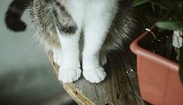 3000亿元宠物经济的背后乱象:猫咪背后,全是生意