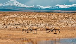 三江源国家公园答界面新闻:保护面积扩至19.07万平方公里