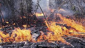 西藏林芝突发森林火灾,消防出动529人参与扑救