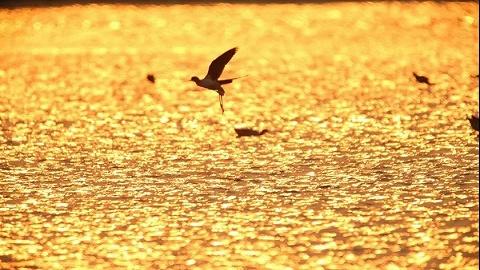 《湿地的力量》:广州首部自然类纪录片展示珠三角湿地魅力