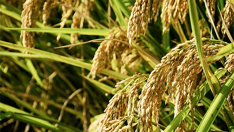 上半年济南农产品风险监测合格率达98.5,居全省第二位