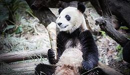 为大自然发声:用影像的力量保护野生动物