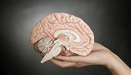 """意识的发展与边界,大脑""""噪音""""何起?"""